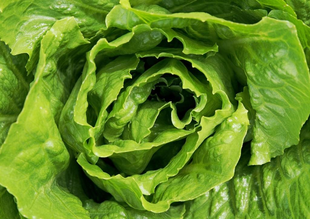 lettuce-1517239_1920
